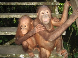 Borneo (162)